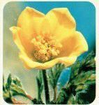 Bloemengroep ALT-tekst